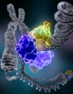 DNA_Repair.jpg