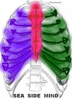 肋骨<<伸び>>