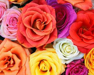 Love_Blooms_Roses,_Bunch_Of_Flowers.jpg